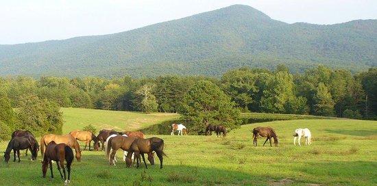 Fort Valley Virginia