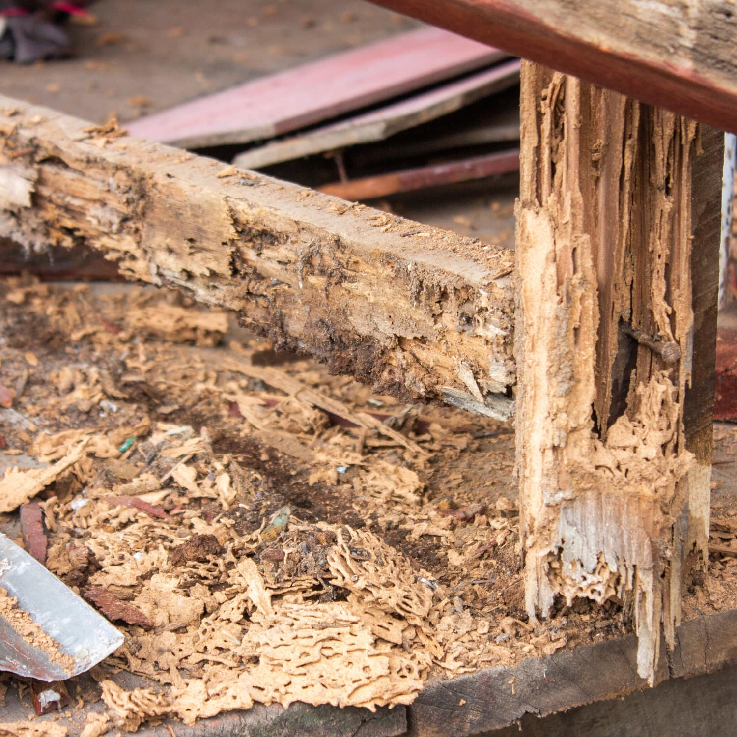 Wood Rot Home