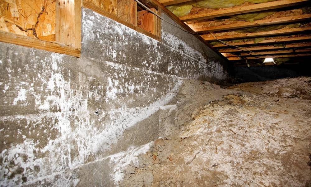 mold causing crawl space odor